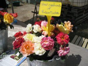 Fabian's New roses